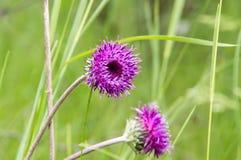Wilde Blumen des Frühlinges Lizenzfreies Stockbild