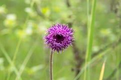 Wilde Blumen des Frühlinges Lizenzfreies Stockfoto