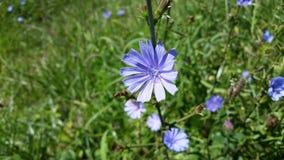 Wilde Blumen des Sommers Lizenzfreies Stockbild