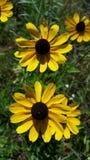 Wilde Blumen des Sommers Stockbilder
