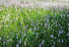 Wilde Blumen, die auf dem Gebiet blühen Stockfoto