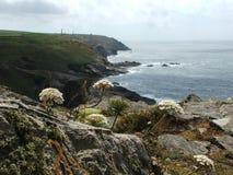 Wilde Blumen, die auf den Granitklippen von Cornwall blühen Lizenzfreie Stockbilder