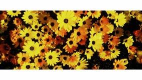 Wilde Blumen durch die Autobahn Stockfotografie