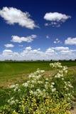 Wilde Blumen, Felder und Himmel Lizenzfreies Stockbild