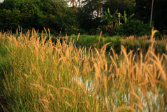 Wilde Blumen, Fluss, Morgen Stockfoto