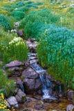 Wilde Blumen Frammed-Nebenfluss Lizenzfreies Stockbild