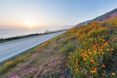Wilde Blumen in großem Sur Stockfotografie