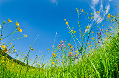 Wilde Blumen im Gras Stockfotos