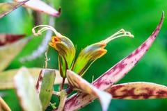 Wilde Blumen im Wald Lizenzfreie Stockbilder