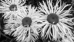 Wilde Blumen in Irland im Sommer Stockbild