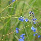 Wilde Blumen Michigans Stockfotos