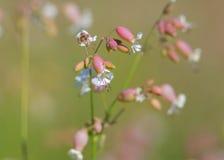 Wilde Blumen Michigans lizenzfreie stockbilder