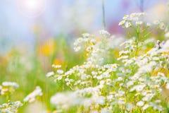 Wilde Blumen mit hellem blauem Himmel Stockfotografie
