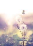 Wilde Blumen und Betriebslöwenzahn, Stockfotografie