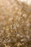 Wilde Blumen und Fauna Stockfotos