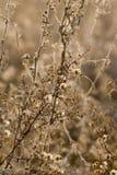 Wilde Blumen und Fauna Stockfoto