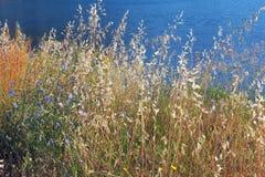 Wilde Blumen und Gras Lizenzfreie Stockbilder