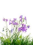 Wilde Blumen und Gras Stockbild