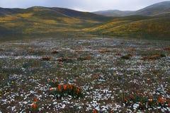 Wilde Blumen und Hügel stockbild
