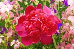 Wilde Blumen und Pfingstrose Stockbilder