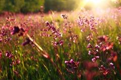 Wilde Blumen und Sonnenuntergangstrahlen stockfotos