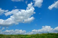 Wilde Blumen und Wolken Stockbilder