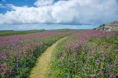 Wilde Blumen Walisers lizenzfreies stockfoto