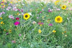 Wilde Blumen-Wiese stockfotos