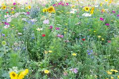 Wilde Blumen-Wiese Stockfotografie