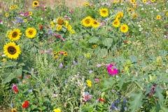 Wilde Blumen-Wiese stockfoto