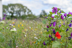 Wilde Blumen-Wiese Lizenzfreies Stockbild
