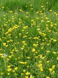 Wilde Blumen-Wiese Lizenzfreie Stockfotos