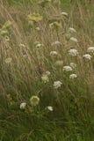 Wilde Blumen-Zaun Lizenzfreie Stockfotos