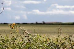 Wilde Blumen zu den Feldern Stockfotos