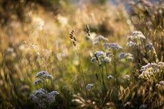 Wilde Blumen-Zusammenfassung Stockfoto