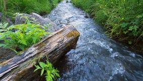 Wilde bosrivier stock videobeelden