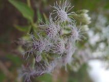 wilde bushes& x27; s bloem royalty-vrije stock foto