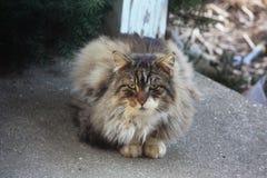 Wilde Cat Begging voor Voedsel stock foto's