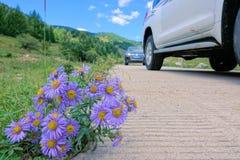 Wilde chrysant stock afbeelding