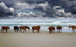 Wilde Corolla-paarden royalty-vrije stock fotografie