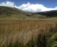 Wilde Cotopaxi-Landschaft stockbilder