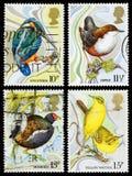 Wilde de VogelPostzegels van Groot-Brittannië Stock Foto