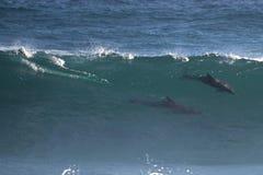 Wilde Delphine in der Welle Stockbild