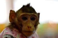 Wilde die aap in een kooi wordt gesloten stock fotografie