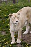 Wilde dieren Royalty-vrije Stock Foto's