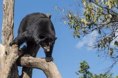 Wilde dieren Royalty-vrije Stock Afbeeldingen