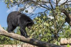 Wilde dieren Royalty-vrije Stock Foto