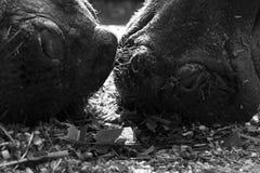 Wilde dieren Stock Afbeeldingen