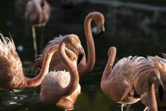 Wilde dieren Royalty-vrije Stock Fotografie
