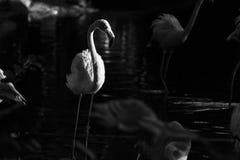 Wilde dieren Stock Foto's
